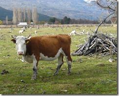 Chile está ad portas de enviar carne natural a Estados Unidos