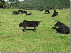 Un buen momento para la carne (Chile).