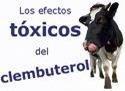 La UE importa carnes de vacuno de países que permiten la cría del animal con clembuterol.