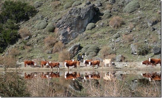 Cambios en normativa PABCO potencian y amplían fomento de la ganadería bovina.