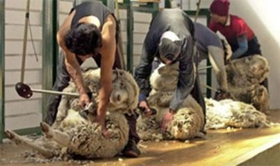 Exportación de lana mostró un incremento de 41,2% a cierre de 2010
