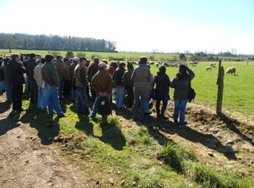 En masivo día de campo organizado por INIA / Analizan sistemas de producción ovina en la Araucanía.
