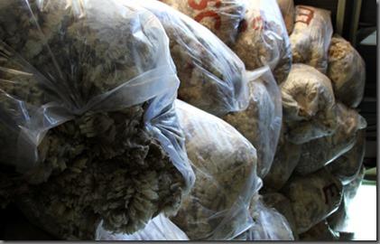 Licitación lote de lana A.G. Rio Baker 2014